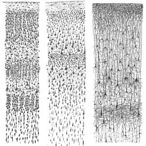Cajal cortex drawings