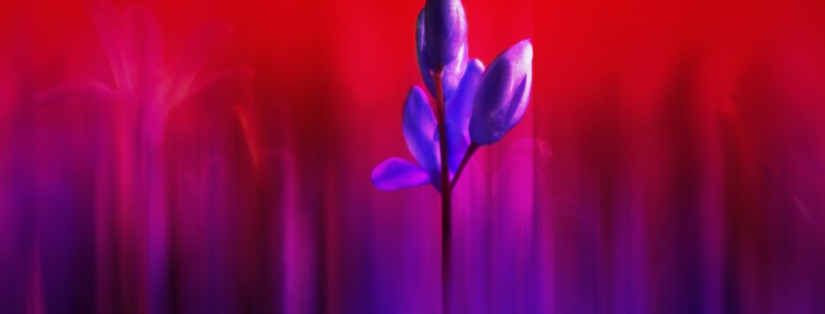 Flower plant abstract out of focus garden red purple spring 807181.jpg!d